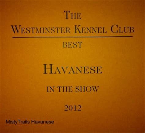 havanese kennel club havanese breed pictures 15