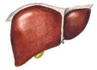 il fegato porta dolore fegato