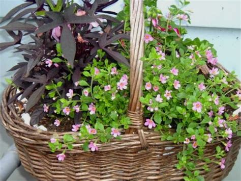 Wicker Basket Planters by Using Wicker Baskets As Planters Container Gardening
