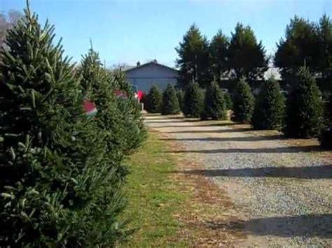 christmas trees mattituck ny zouaves 47 best festivals images on festival festivals and island