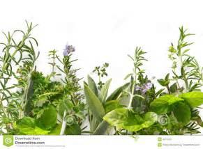 Herb Garden Plan cadre d herbe photo stock image 4271520