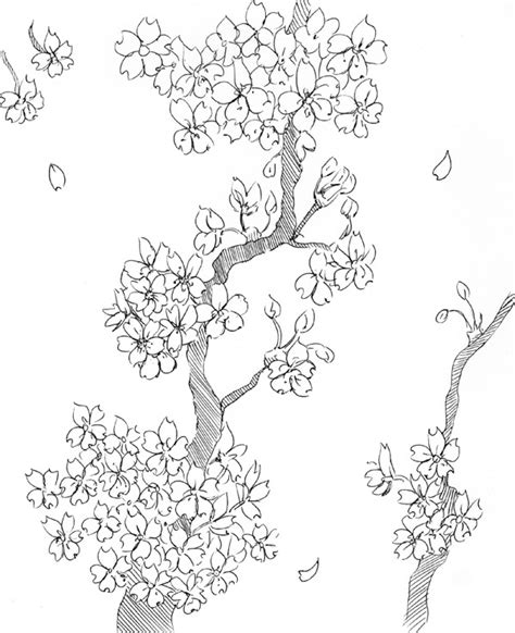 Cherry Blossom Branch Drawing Outline by Black And White Cherry Blossom Tree Drawing Pictures To Pin On Pinsdaddy