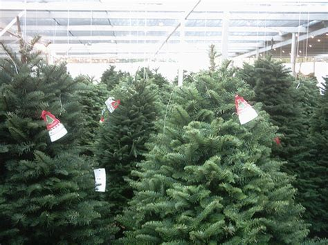 when will home depot sell real christmas trees how much does a tree cost howmuchisit org