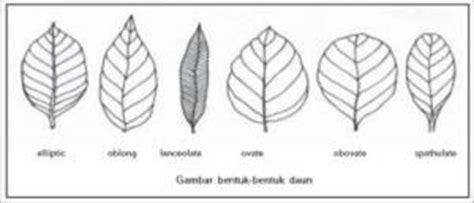 Lu Bentuk Jamur daun