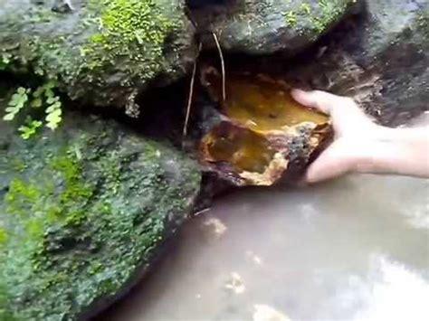 Pecah Seribu Merah Siem Small Hq pengambilan bongkahan batu merah siem di hutan doovi