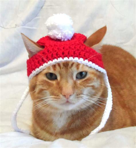 cat in hat cat hats www imgkid the image kid has it