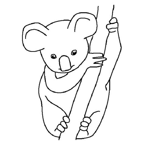 template of koala 1000 images about coloring pages on fall