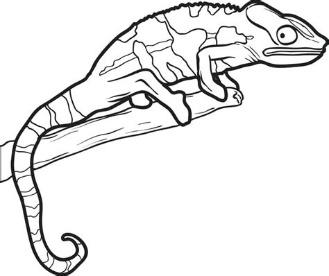 cute gecko coloring pages gecko coloring pages coloring collection