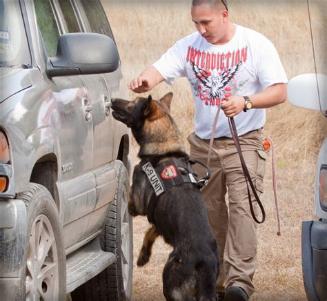 how are dogs trained to detect drugs trained dogs worldwide canine inc
