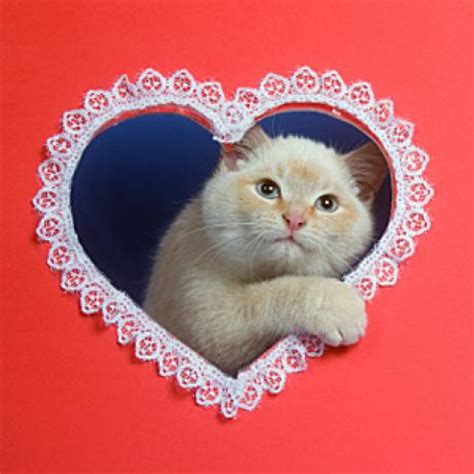 happy valentines day cat s day treats for cats catster