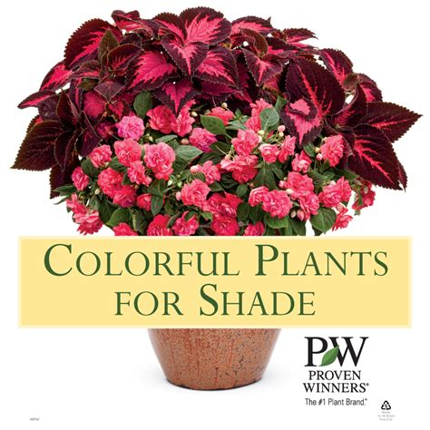 colorful plants for shade 18x18 quot sign proven winners