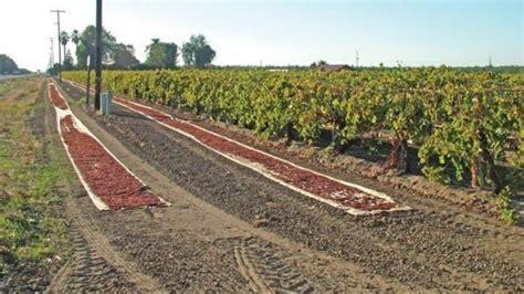 prezzo uva da tavola prezzo uva da tavola prezzi vino andamento prezzi