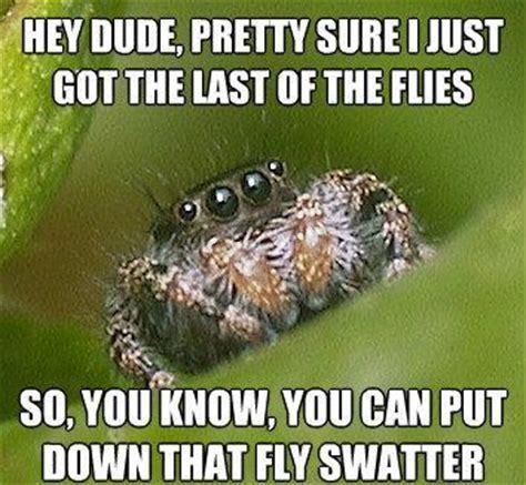 Misunderstood Spider Meme - the sad world of the misunderstood house spider