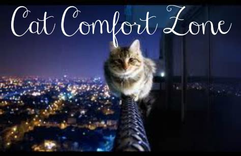comfort cat best perfume safety zone v comfort zone how to pick