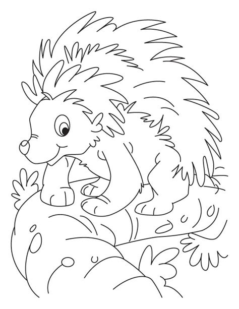 free coloring pages of porcupine
