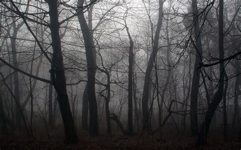 wallpaper abyss forest forest wallpaper and background image 1440x900 id 78113