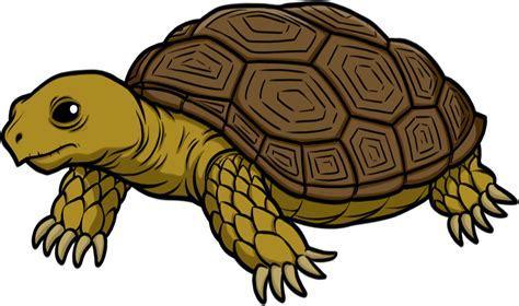 tortoise color turtoise clipart transparent pencil and in color