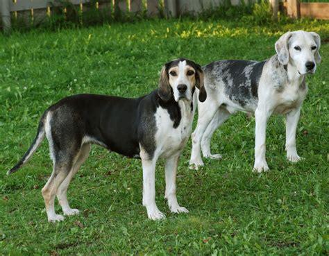 wann hund einschl fern jagen mit dem dunker in norwegen