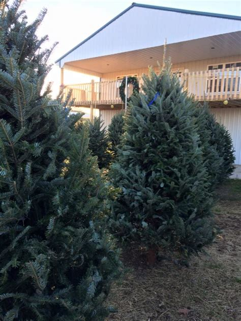 pick out your own christmas tree at these 10 picture