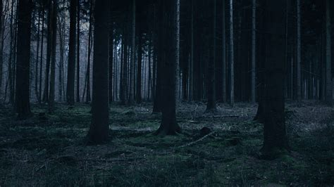 wallpaper dark tree mj52 forest dark night trees nature papers co