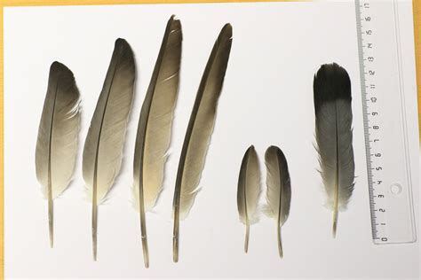 can you identify those bird feathers