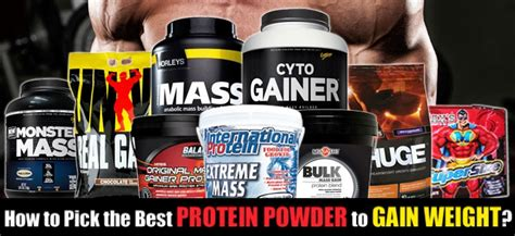 b protein powder for weight gain how to the best protein powder to gain weight