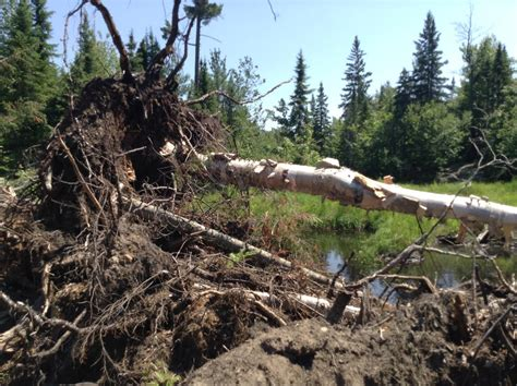 Plumb Creek Timber by County Road 595 A Bad Idea In The Wrong Place Mining