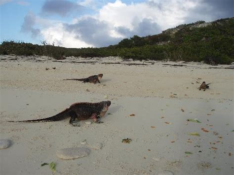 iguana island thunderball grotto picture of staniel cay yacht club