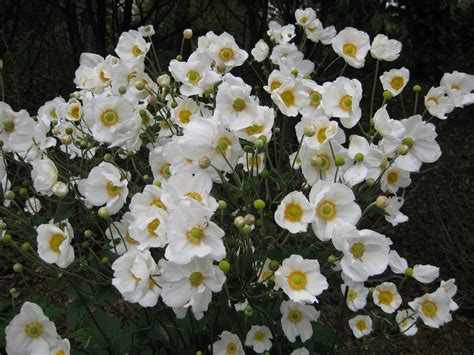 rotary botanical gardens hort blog perennial plant of the year 2016