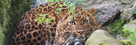 zoologischer garten eberswalde veranstaltungen zoo eberswalde f 246 rderverein