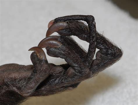 Umn Finder Science Minus Details Lemurs Aye Ayes Mammal
