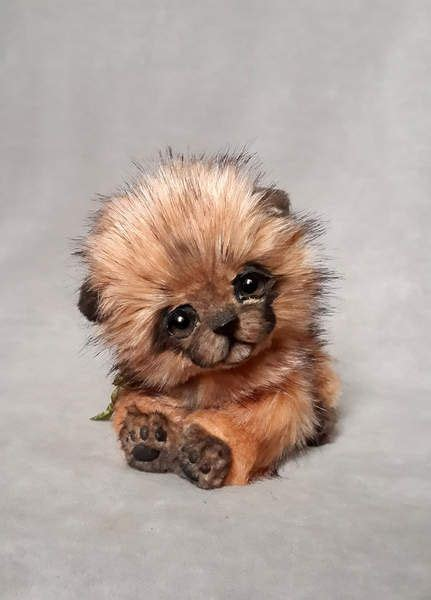pomeranian coat colors 17 best ideas about pomeranian colors on pomeranian puppy pomeranians and