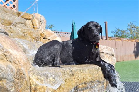 the bone adventure backyard bone backyard dog daycare dog boarding orange county