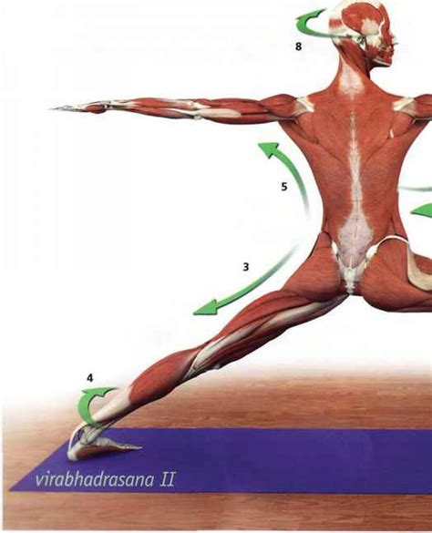 key muscles of yoga 1607432382 pose with movements yoga key muscles dahn yoga health center