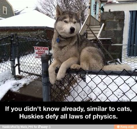 Andersons Defy The Laws Of Physics by Huskies Defy All Laws Of Physics Ifunny For Laughs