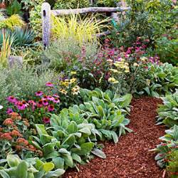 salvia sierra de san antonio 4 easy care flower bed ideas sunset