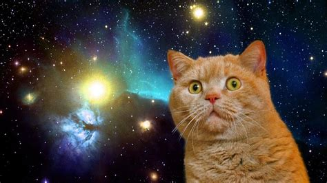 Cat In Space space cats hd wallpaper wallpapersafari