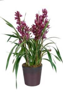 Bamboo In A Vase Westland Orchids Inc Business Center In Carpinteria