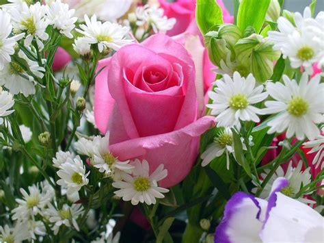 Multi Bud Vase Wallpapers Rose Flowers Wallpapers