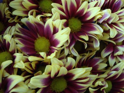 6 Aneka Bunga Potong toko bunga semarang jogja surabaya jakartaassyaba