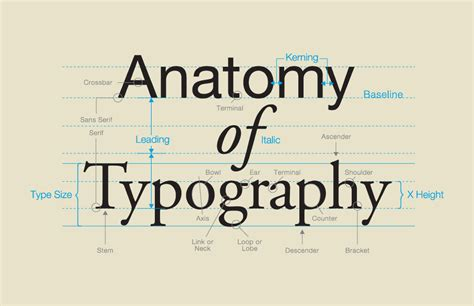 typography anatomy anatomy of a letter form o dell graphic solutions