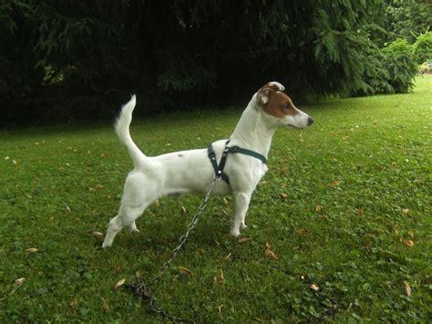 photo qqn pour me dire sa race chiens forum animaux