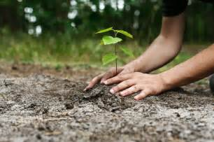 tree planter eco canada