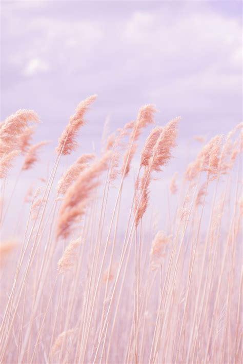 dreamy pastel beach grass pastel beach aesthetic pastel