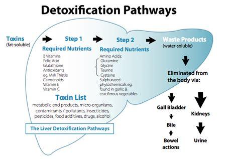Msm Detox Symptoms by Douglas Laboratories Functional Detox Ingredients Part 4 Msm