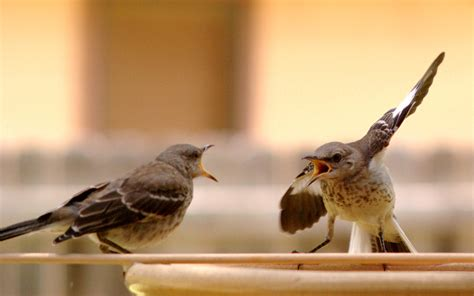 the birds and other how to win an argument at work