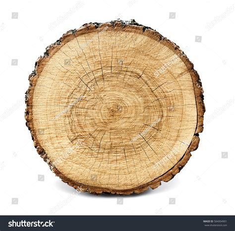 wood cross section large circular piece wood cross section stock photo