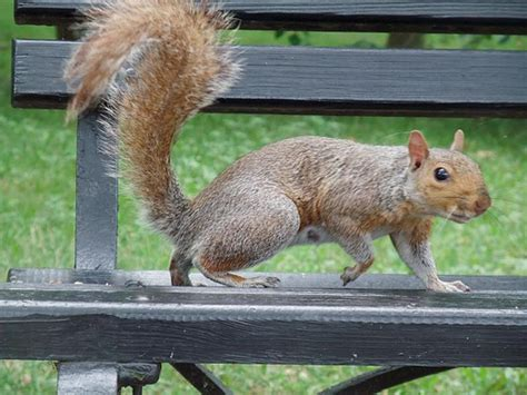 the news for squirrels october is squirrel awareness month