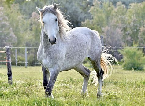white mustang horse mustang horse names
