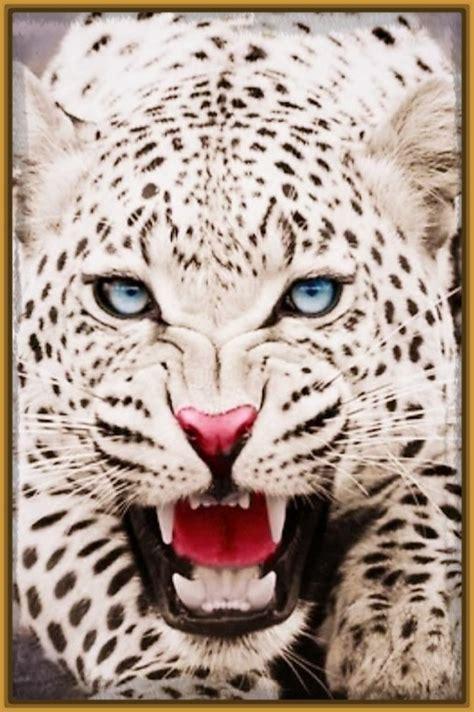 imagenes impresionantes para fondo de pantalla imagenes de los tigres para fondo de pantalla archivos